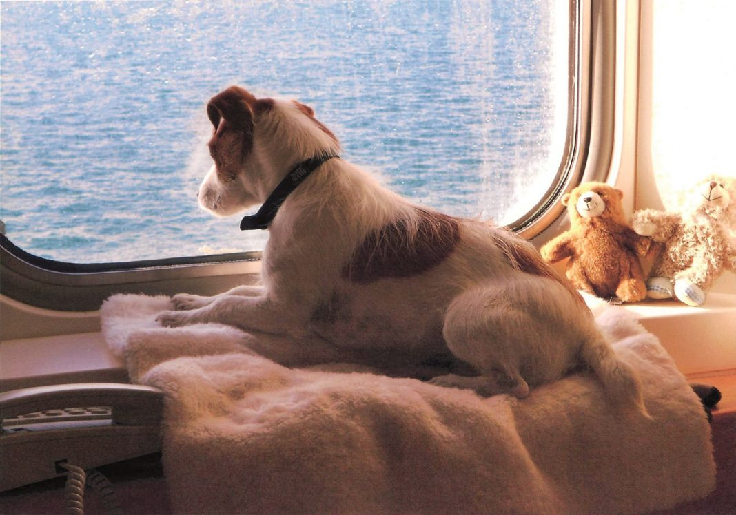 Brittany Ferries Mascotas min